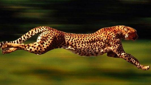 The Top 10 Fast Animals Ever You Need To Know About
